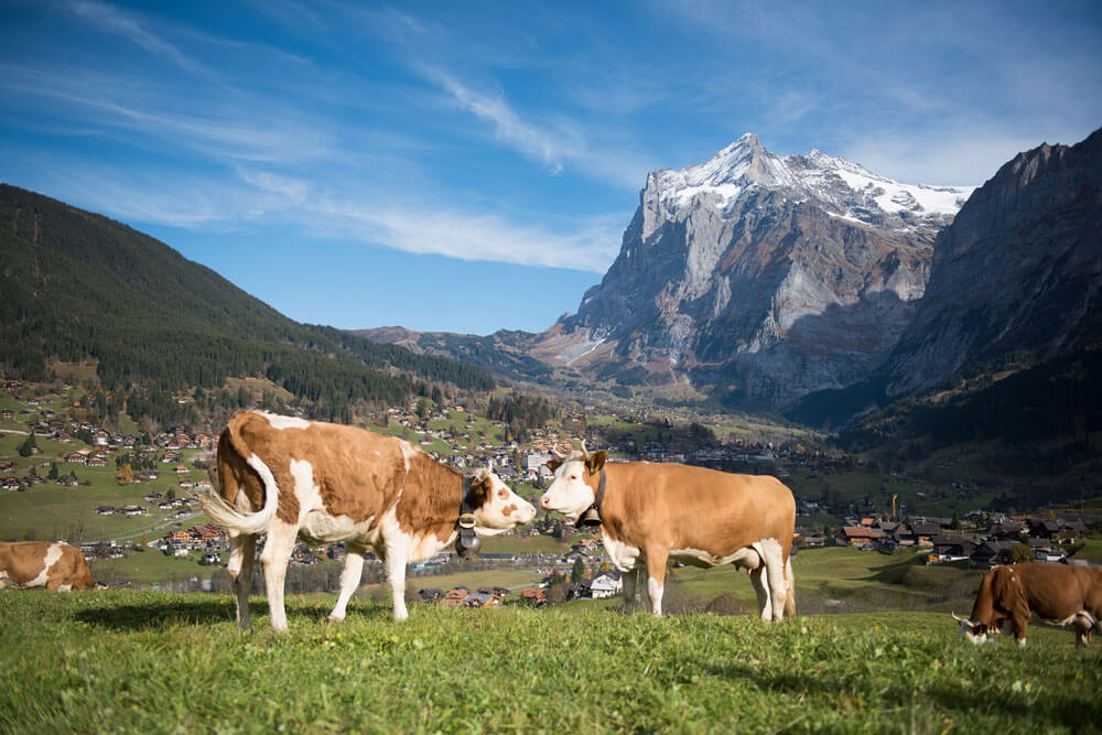 Grindelwald countryside life.jpg